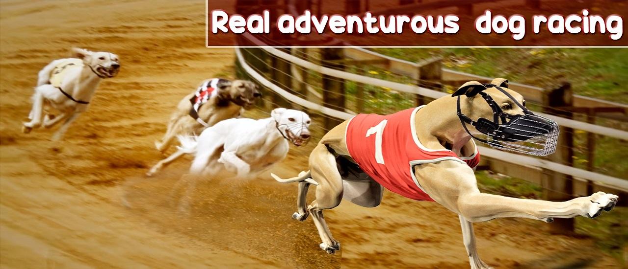 Image بازی انلاین مسابقات سگ ها